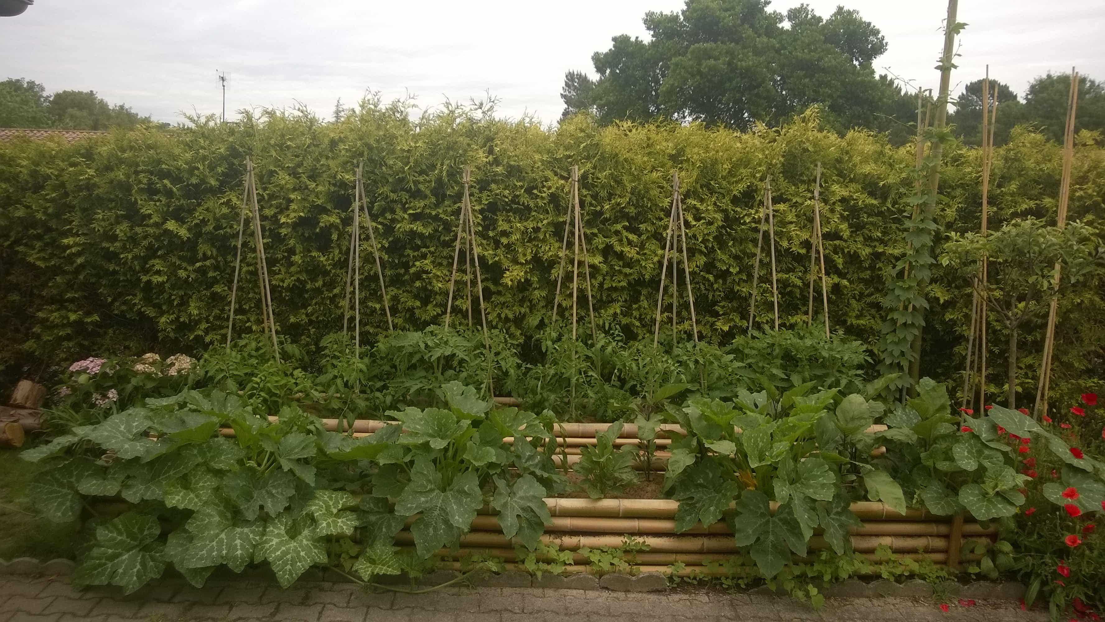 potager en permaculture à hossegor (landes)