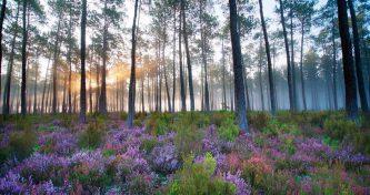 Quelles espèces planter dans les Landes ?